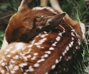 animals, bambi, and cute image