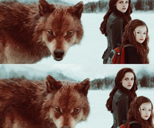 bella swan, jacob black, and mackenzie foy image