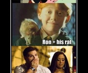 funny, harry potter, and rat image