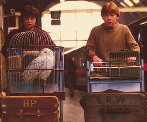 harry potter, ron weasley, and hp image