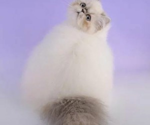 cat, funny, and glamor image