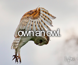 before i die and owl image