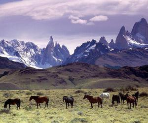 horse, mountains, and animal image