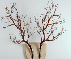 antlers, deer, and nature image