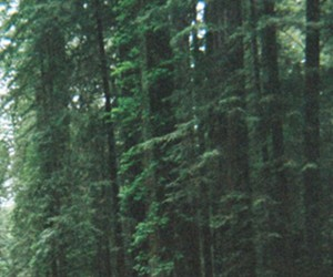 header and woods image