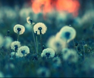 flowers, wallpaper, and dandelion image