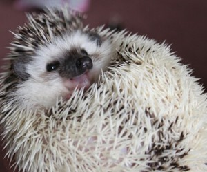 hedgehog, pet, and unusual image