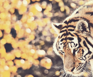 tiger and animal image