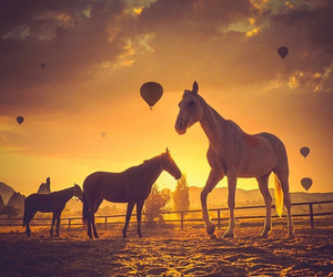 horses, animals, and beautiful image