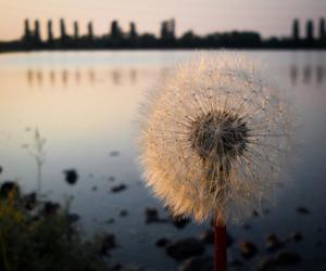 amazing, flower, and photography image