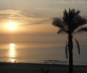 beautiful, palmer, and summer image