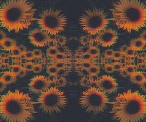 sunflower, flowers, and trippy image
