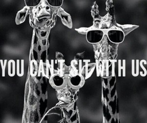 animals, funny, and giraffe image