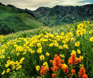 field, flowers, and yellow flowers image