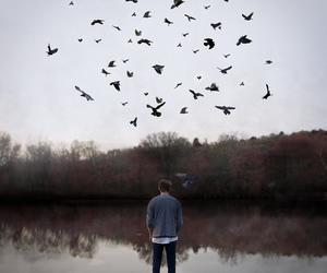 birds, boy, and lake image