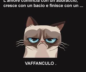 gatto, frasi, and smile image