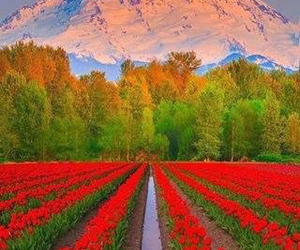 amazing, colors, and flowers image