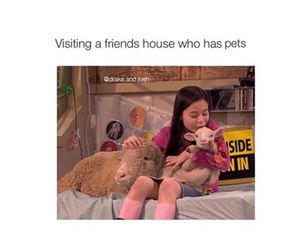 funny, lol, and pets image
