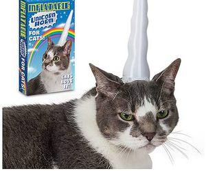 cat, unicorn, and funny image