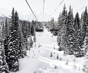 winter, forest, and ski image