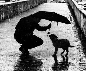 dog, rain, and animal image