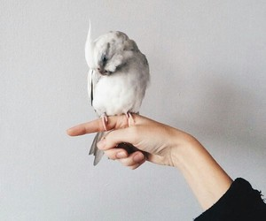 bird, animal, and white image