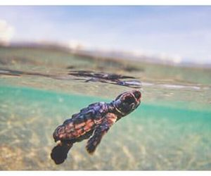 baby sea turtle image