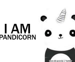 panda, unicorn, and pandicorn image