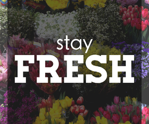 fresh, flowers, and stay image