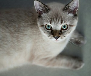 cats, animals, and eyes image