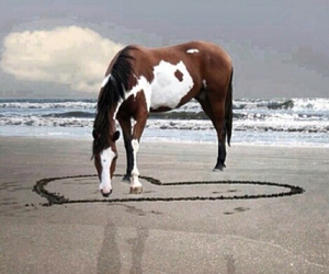 beach, heart, and horse image