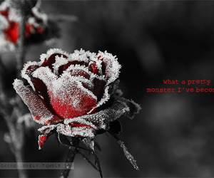black, flower, and pretty image