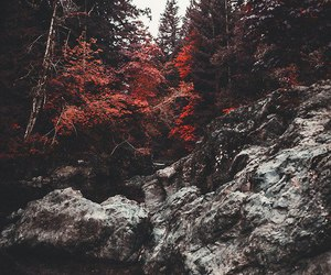 forest, red, and wald image