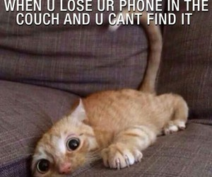 cat, funny, and phone image