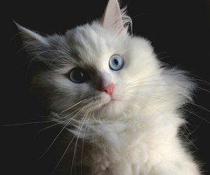 cat, white, and love image