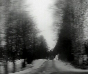 black and white, forest, and grunge image
