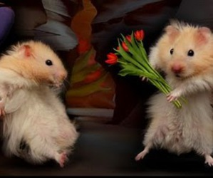 hamster, flowers, and funny image
