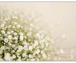 babys breath, flowers, and white image