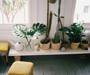green, plants, and tropic image