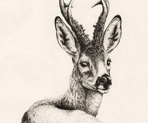 black, tatoo, and roe deer image