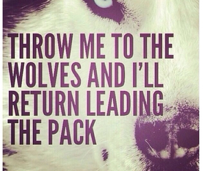 wolf, quote, and leader image