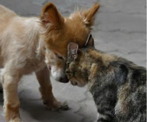 cat, dog, and animal image