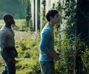 thomas, alby, and the maze runner image