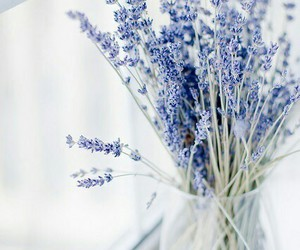 flowers, lavender, and blue image