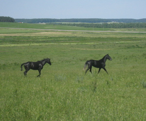 field, grass, and horses image