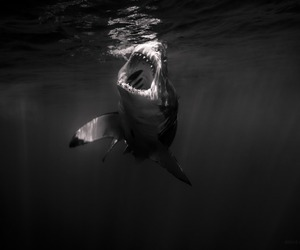 b&w, black and white, and ocean image