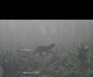 black panther and jungle image