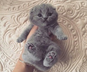 adorable, art, and fluffy image