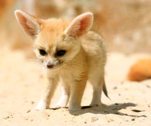 cute, animal, and fox image