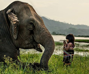 elephant, animal, and child image